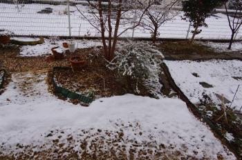 記録的大雪 (2)
