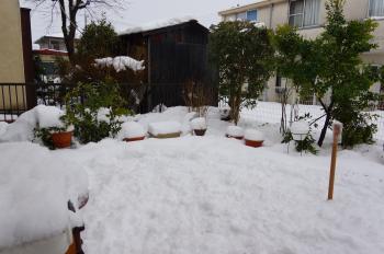 記録的大雪 (3)