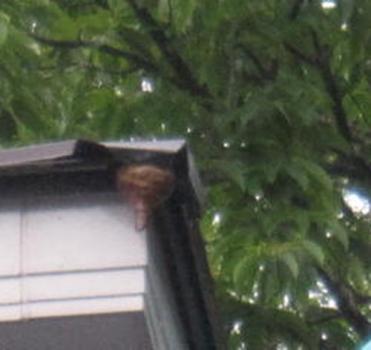ハチの巣退治3