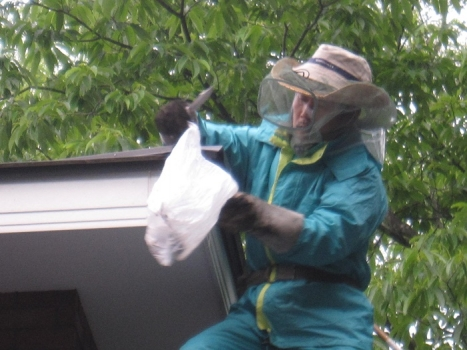 ハチの巣退治4