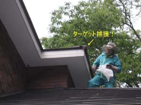 ハチの巣退治2