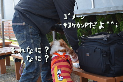 DSC_9484.jpg