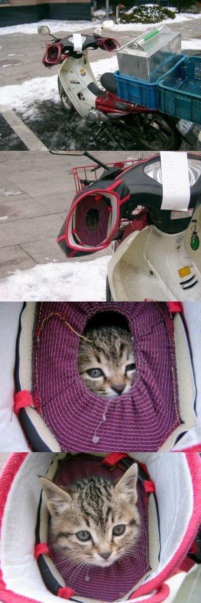 cat_01921.jpg