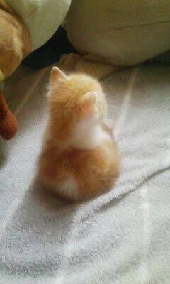 cat_02131.jpg