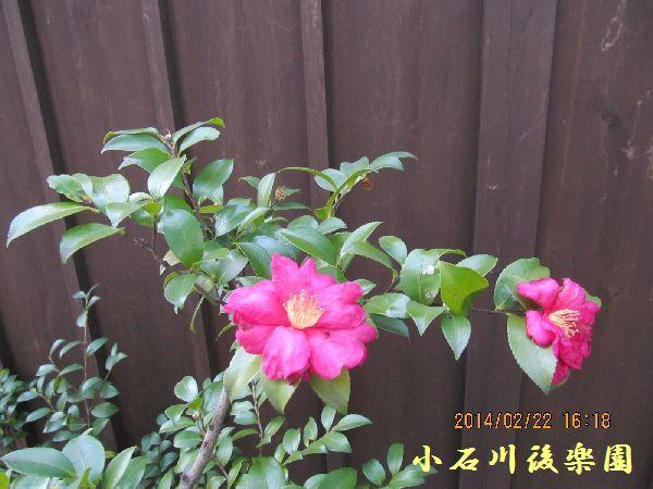 0222kouraku02.jpg