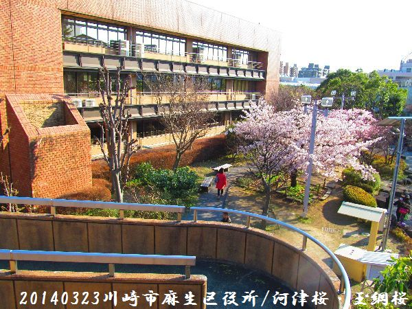 0323sakura01.jpg