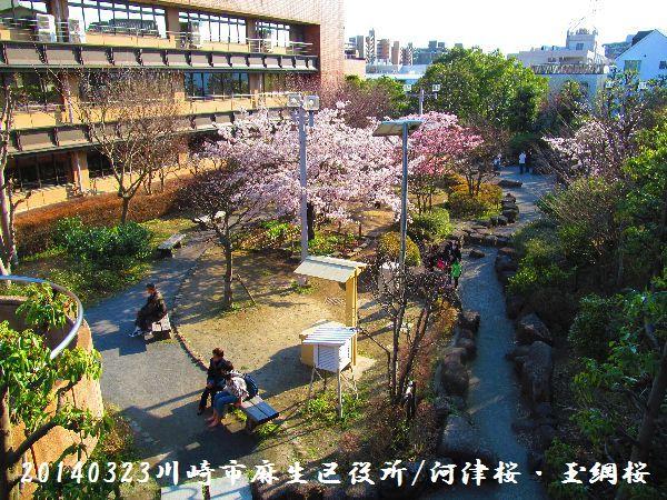 0323sakura02.jpg