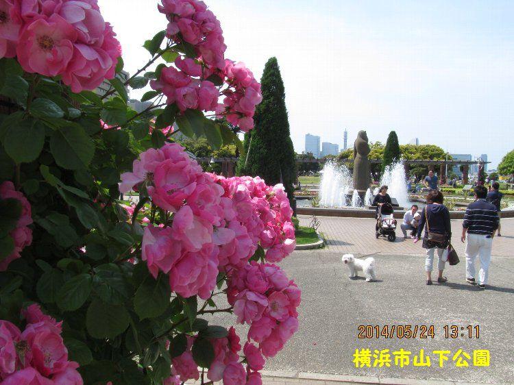 0524yamashita10.jpg