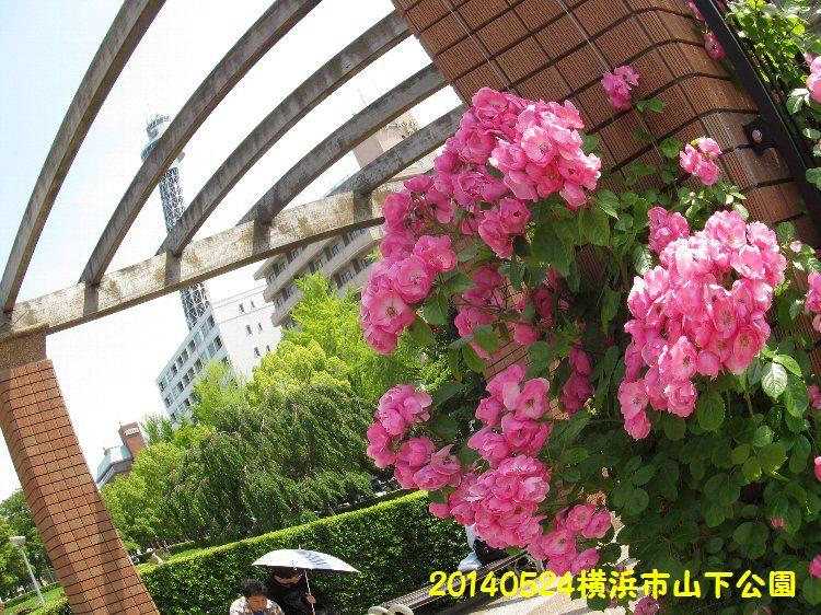 0524yamashita14.jpg