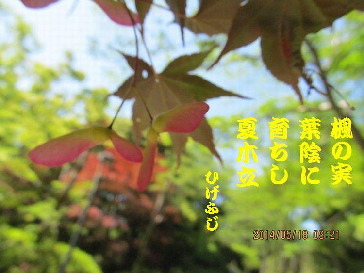 20140518haiku06.jpg