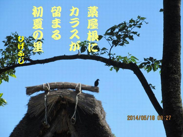 20140518haiku07.jpg