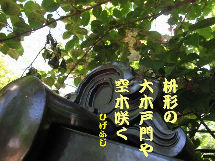 20140518haiku09.jpg