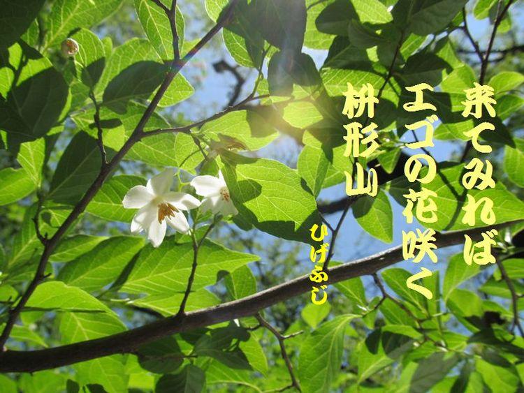 20140518haiku12.jpg