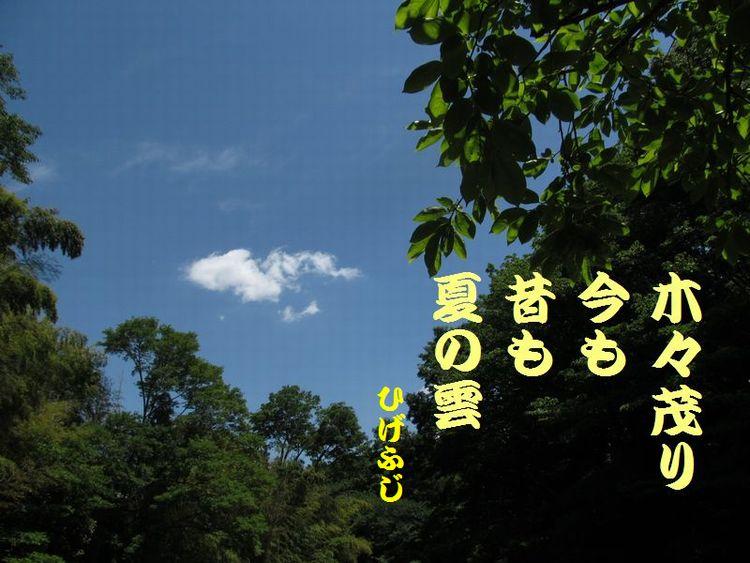 20140518haiku15.jpg