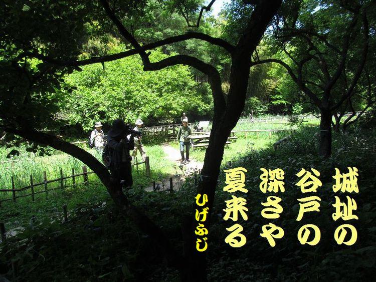 20140518haiku16.jpg