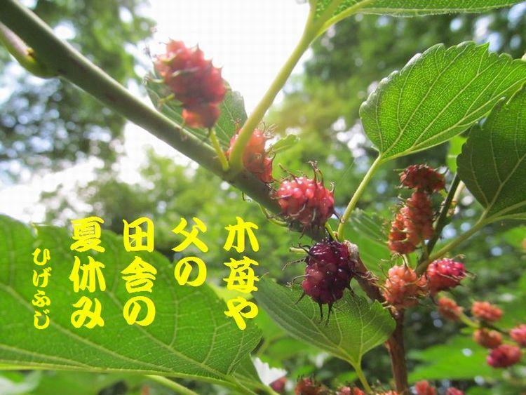 20140518haiku18.jpg