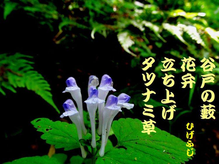 20140518haiku19.jpg