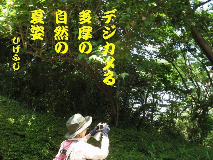 20140518haiku20.jpg
