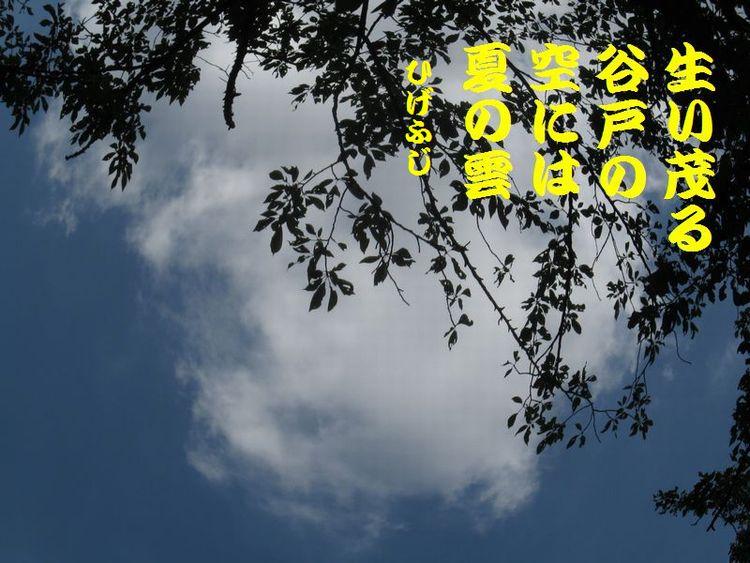 20140518haiku21.jpg