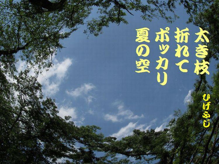 20140518haiku22.jpg