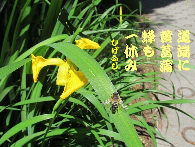 20140518haiku23.jpg