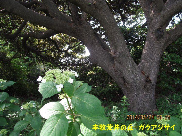 20140524honmoku06.jpg