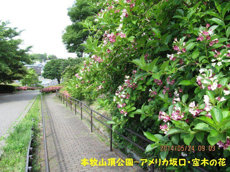 20140524honmoku13.jpg