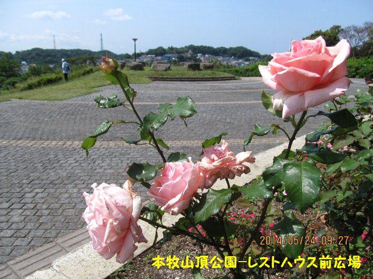 20140524honmoku19.jpg