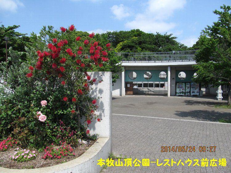 20140524honmoku20.jpg
