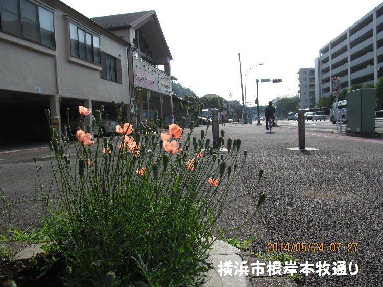 20140524negishi07.jpg
