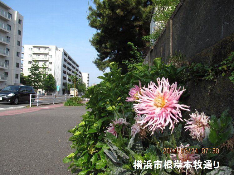20140524negishi09.jpg