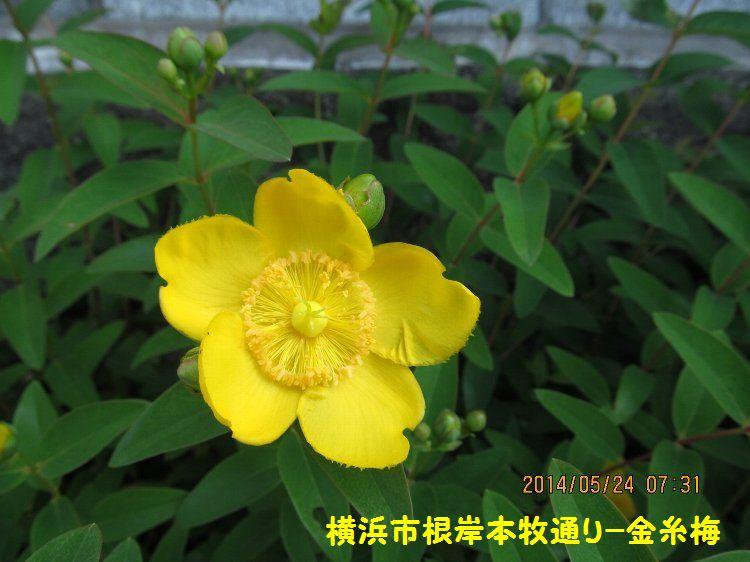20140524negishi10.jpg