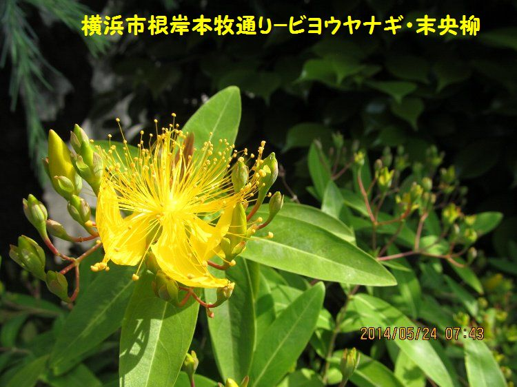 20140524negishi14.jpg