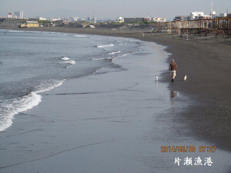 20140530enoshima05.jpg