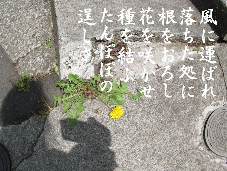 201405wf07.jpg