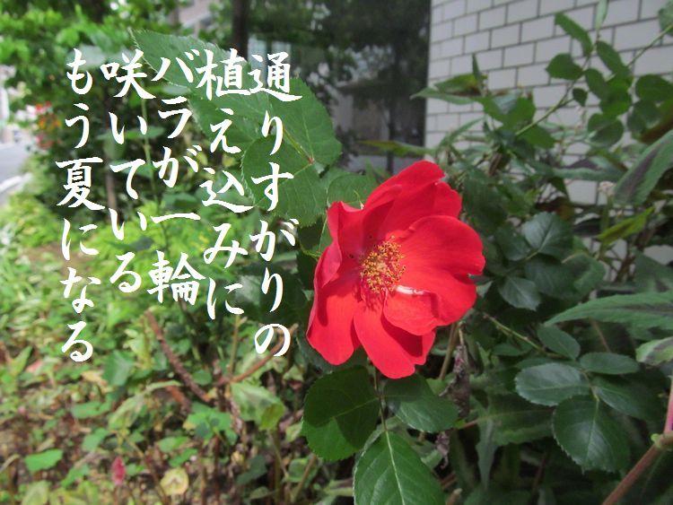 201405wf08.jpg