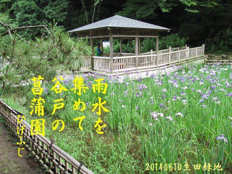 20140610haiku03.jpg