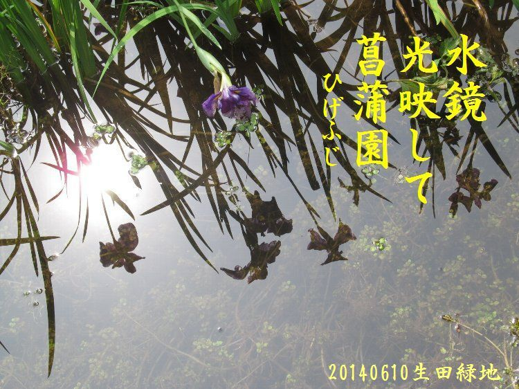 20140610haiku04.jpg