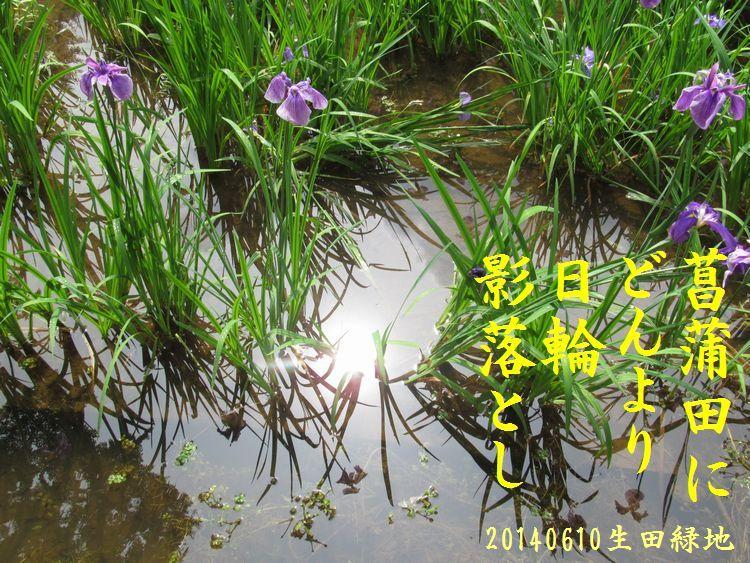 20140610haiku05.jpg