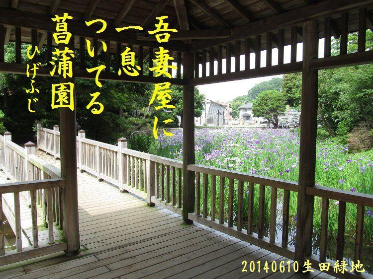 20140610haiku06.jpg