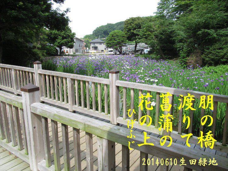 20140610haiku08.jpg