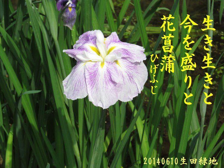 20140610haiku09.jpg
