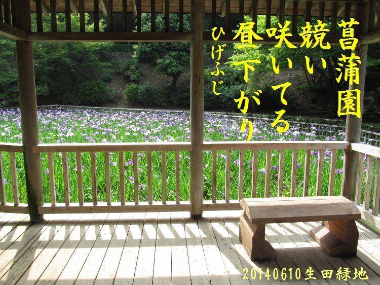 20140610haiku11.jpg