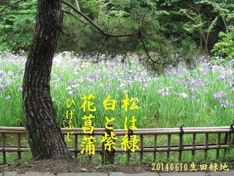 20140610haiku12.jpg
