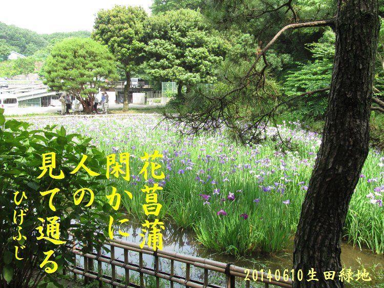 20140610haiku13.jpg
