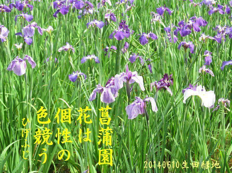 20140610haiku14.jpg
