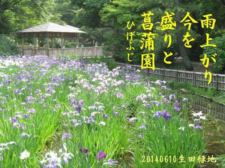 20140610haiku20.jpg