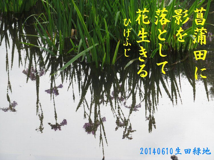 20140610haiku24.jpg