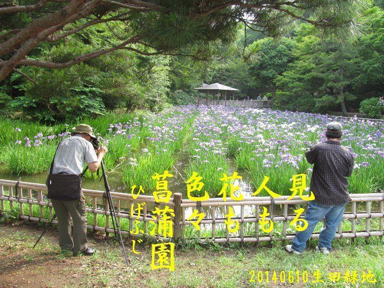 20140610haiku25.jpg