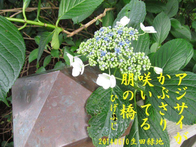 20140610haiku29.jpg